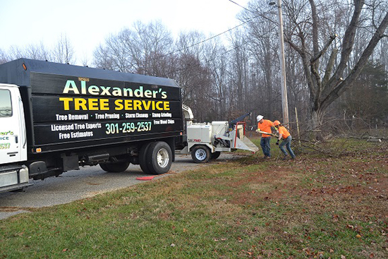 Charles MD Tree Removal